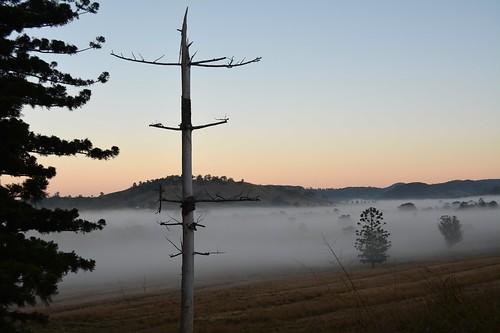 morning winter sky fog sunrise landscape dawn countryside foggy australia deadtree nsw treebark australianlandscape foggymorning treesinfog northernrivers valleyfog morninglandscape australianweather hooppines leycestercreekvalley