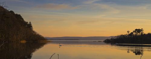 lake galway ireland water swan sun orange evening nature landscape