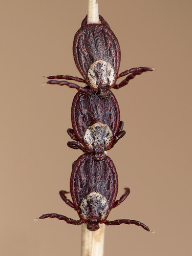 ticks & tricks | by Ryszard I