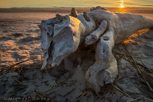 sunrise florida evolution driftwood coastal fernandinabeach ameliaisland cumberlandsound ameliariver fortclinchstatepark