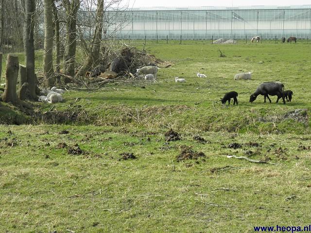 24-03-2012 rs'80 Bleiswijk 25 Km  (84)