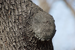grown over branch stump, Tokina 150-500mm f/5.6 | by cooltouch