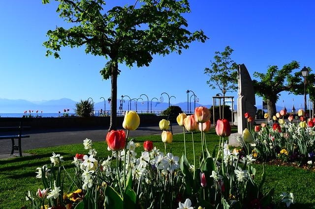 Fête de la tulipe in Morges VD 🌷😍
