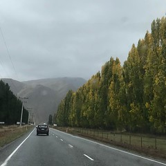 Road lining