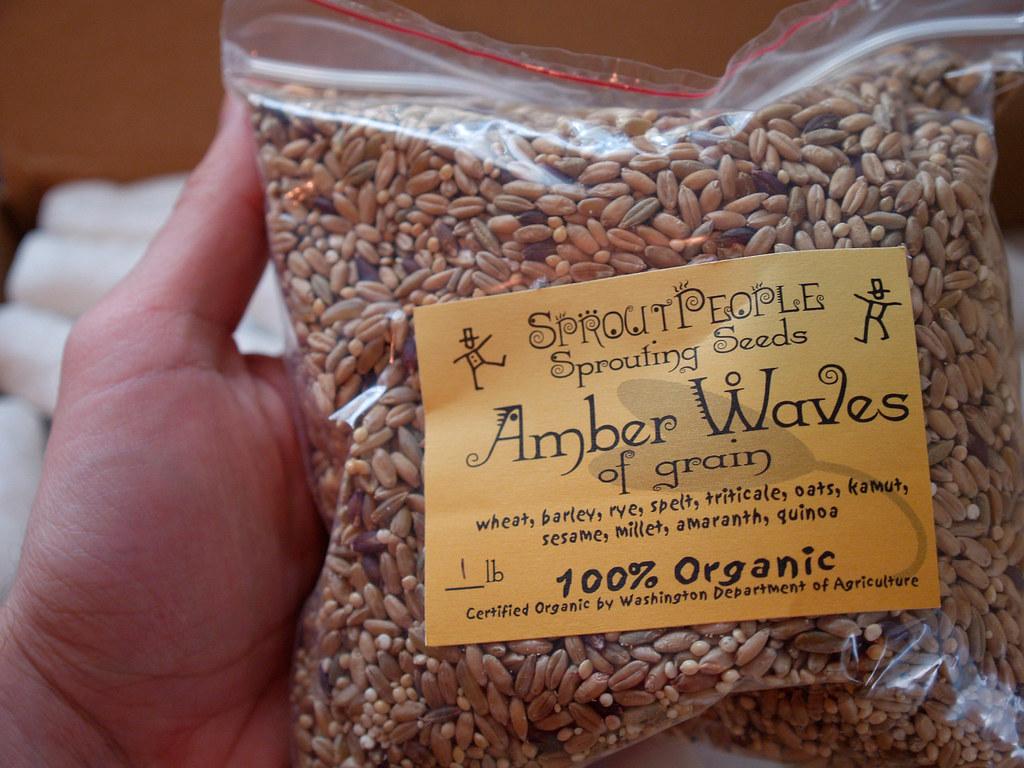 Amber Waves Of Grain Wheat Rye Barley Triticale Oats Flickr