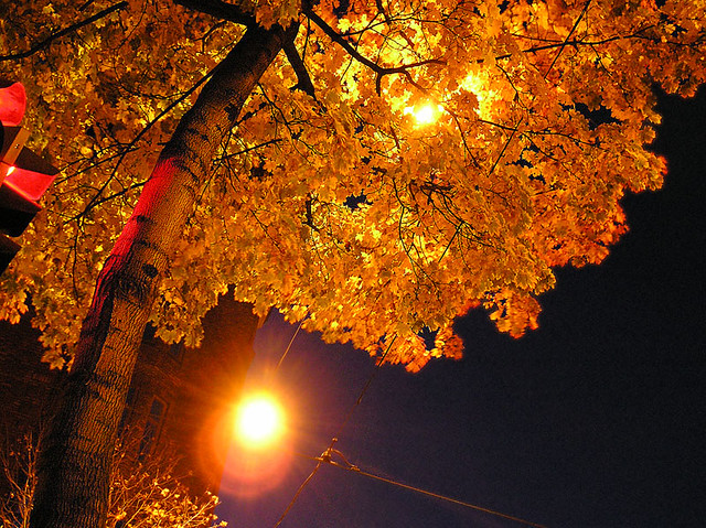Autumn is yellow and red