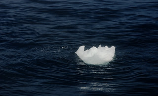 Floating ice | by adavies