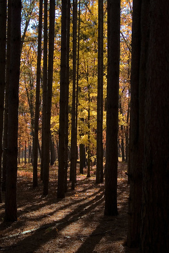 park autumn light shadow ohio color tree fall nature water leaves yellow forest leaf northwest evergreen toledo tamron metropark oakopenings aprevit