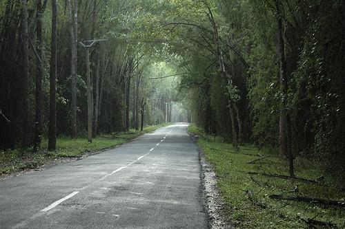 road nikond70 kerala wayanad nh212