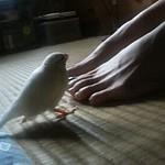 Our Java sparrow