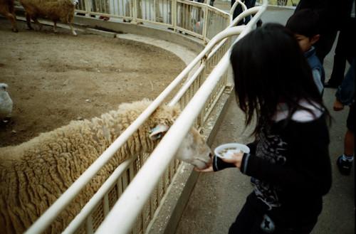 ヒツジに餌やり | by ryumu