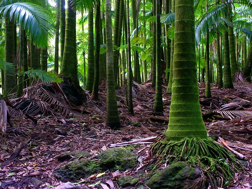 travel nature topf25 wow hawaii scenery gutentag 100v10f bigisland onomea