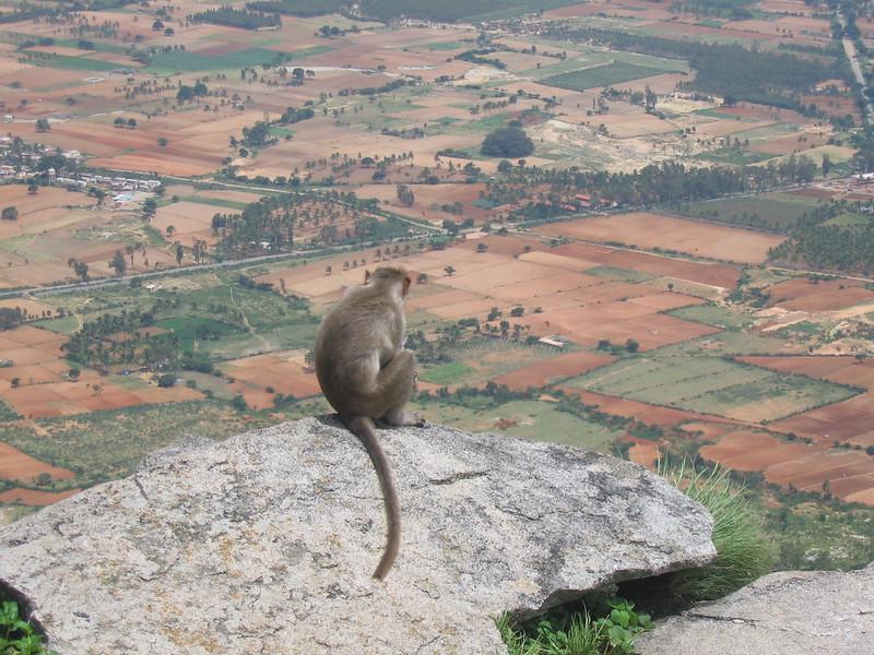 Monkey on hilltop