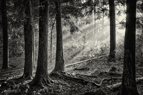 wood trees light england monochrome woodland blackwhite unitedkingdom sony gb sunrays tamron oxfordshire dorchester crepuscular southoxfordshire a99 sonyalpha andyhough slta99v littlewittenhamwood andyhoughphotography tamronsp70200di