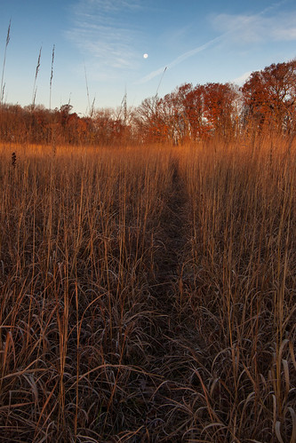 morning november sunrise illinois desplaines compassplant indiangrass desplainesillinois cookcountyforestpreserves kloempkenprairie