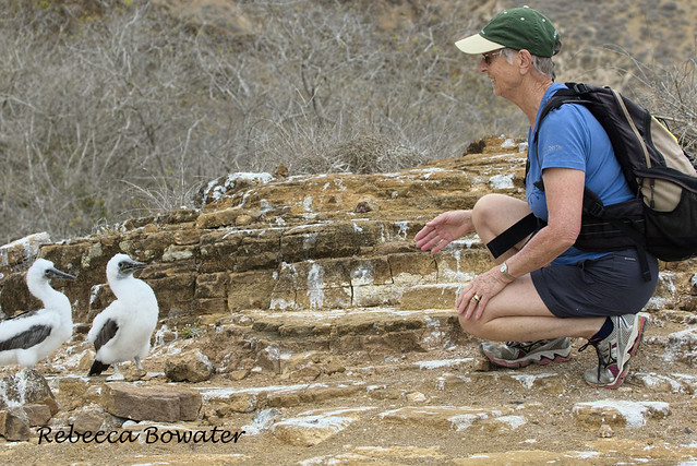 Here I am looking at Booby chicks