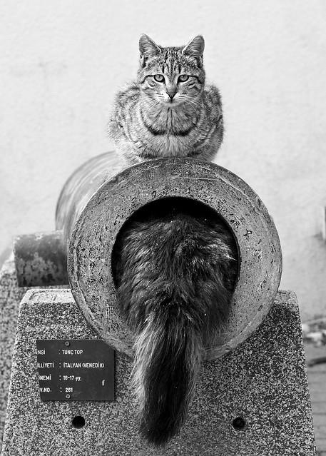 The cannon bore inspector&supervisor