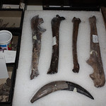 Thu, 11/21/2013 - 4:56pm - Vertebrate Paleontology Collection