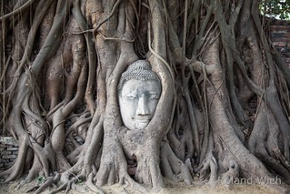 Ayutthaya - Buddha Head in Tree Roots | by Rolandito.