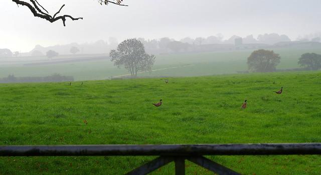 Englands green an Pheasant land!
