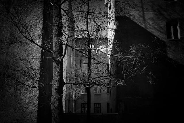 Walls, branches, shadows - Стены, ветви, тени