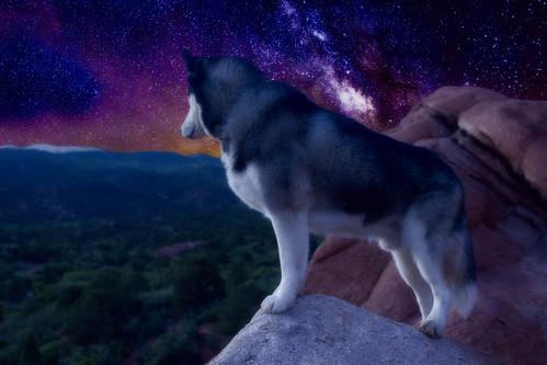 sunset dog dogs canon husky colorado dusk siberianhusky siberian t2i canonrebelt2i