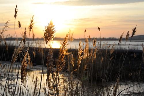 light sunset water michigan reserve marsh pointemouille