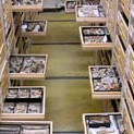 Tue, 05/27/2014 - 11:11am - vertebrate paleontology