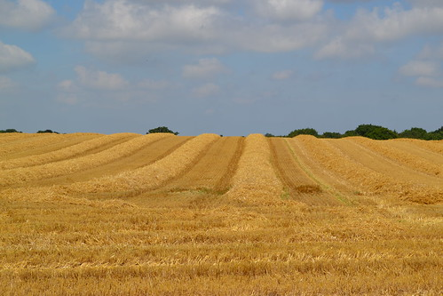 summer sun hot bright dry rows harvesttime