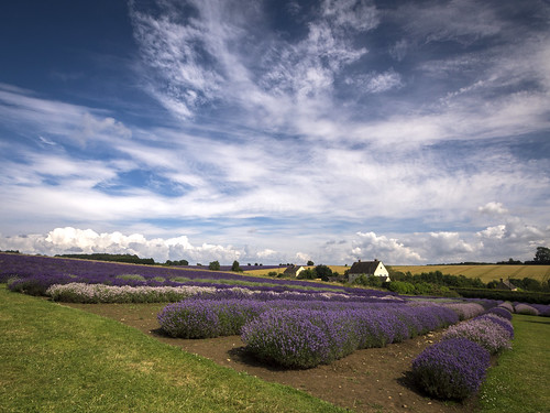 english field rural lumix countryside purple farm broadway harvest lavender olympus cotswolds panasonic fields worcestershire dmc cotswold worcs snowshill m43 mft thecotswolds gh3 2013 damianward ©damianward micro43 microfourthirds 918mm cotswoldlavender mzuikodigitaled