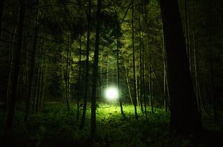 The woods | by Boudewijn Berends