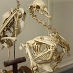 Thu, 11/21/2013 - 5:07pm - vertebrate paleontology
