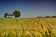 Bowmanville Farm