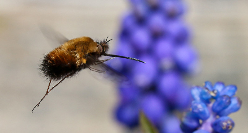 beefly5