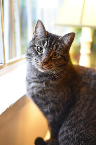 Cat | by Arturo Betancourt Photography