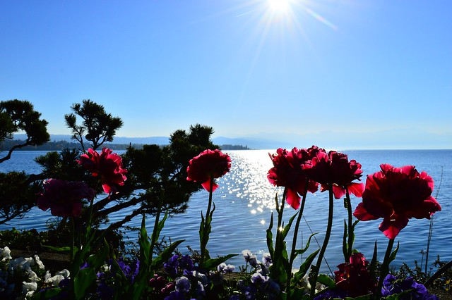 Am Seeufer in Morges