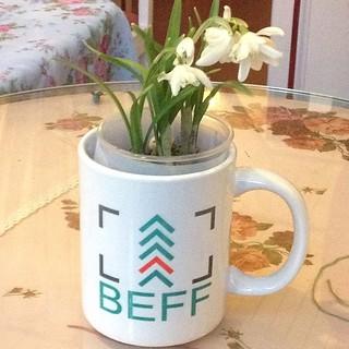 Вчера у нас появились кружки с логотипом Баренц Экологический Фильм Фестиваль от Mr. Prezents и подснежники @beffest #beffest #petrozavodsk #spring #подснежники