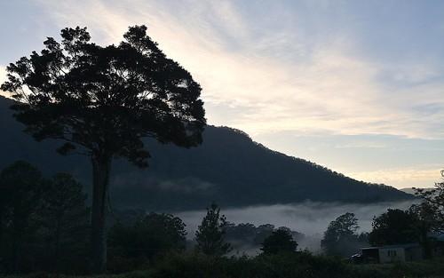 morning autumn sky mist mountain tree fog landscape spur countryside shed australia bluesky ficus valley nsw australianlandscape figtree northernrivers valleyfog ficusobliqua morninglandscape mountburrell blueknobrange