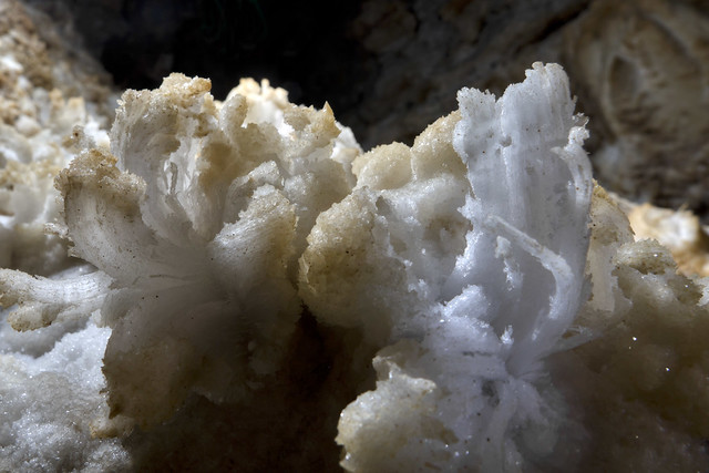 Gypsum flowers, Crystal Chasm, Cumberland Caverns, Warren County, Tennessee 17