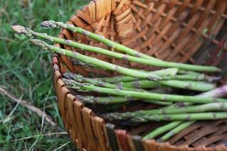 Asparagus Harvest Spring 2014   by Virtualdistortion