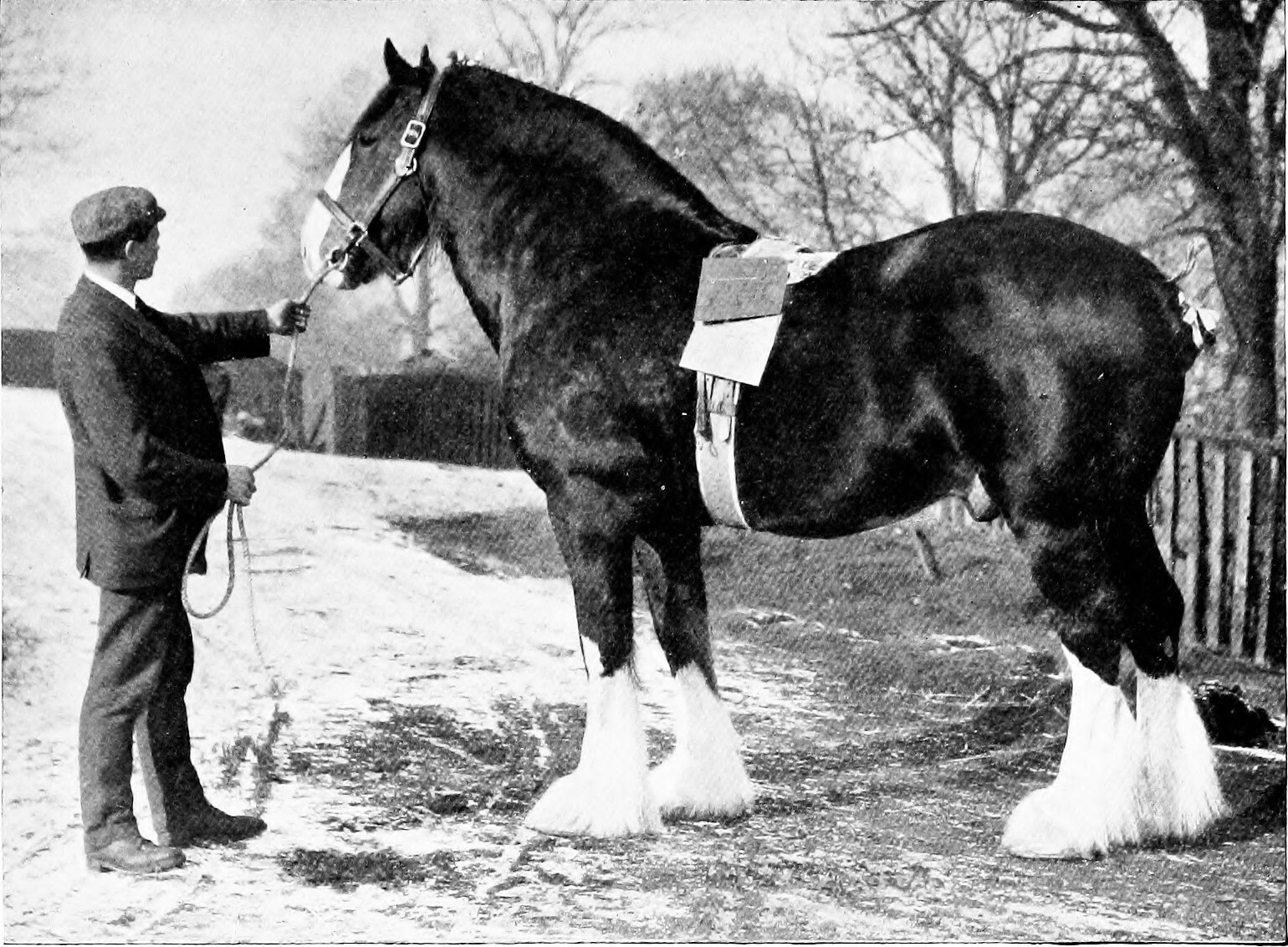 Clydesdale Horse - Horse Scanner