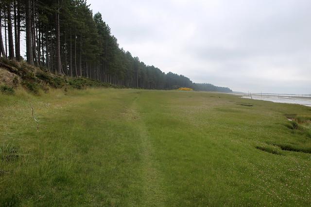 Culbin Forest near Nairn