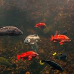 An Assortment Of Reef Fish