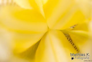 Gelb | Projekt 365 | Tag 144