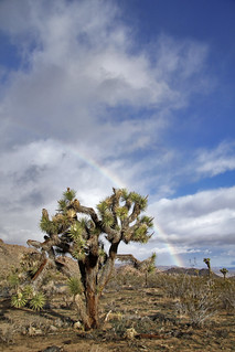 Rainbow on a stormy day | by Joshua Tree National Park