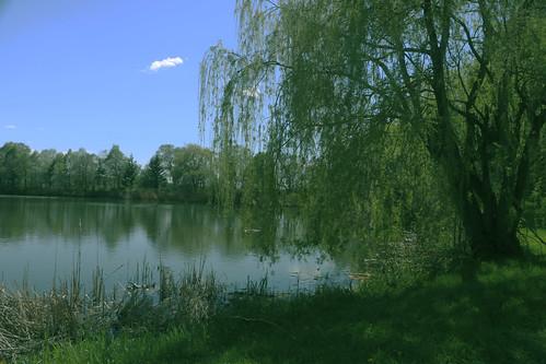 park lake canada green nature photoshop canon landscape paradise montréal quebec montreal lac vert québec paysage weepingwillow parc paradis jeandrapeau saulepleureur 70d canon70d