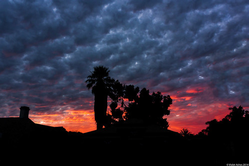 sunset silhouette canon sunsets australia palm redsky southaustralia gawler canonphotography sunsetphotography canoneos450d sunsetaday
