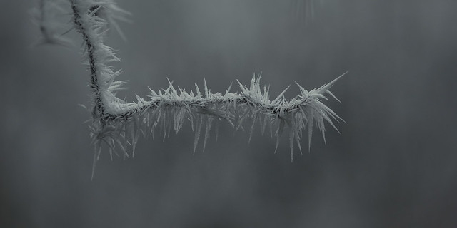 frozen nature 6608