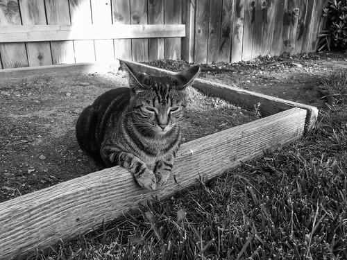 Cat lays in wait