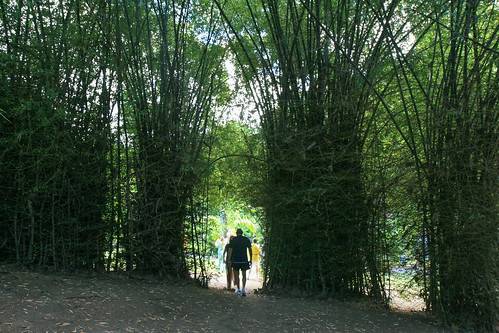 Bamboo Thicket | by toriwil